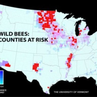 Declining Bee Populations