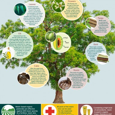 The Life of Neem Infographic