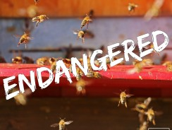 Bees: Vital to Agriculture and Our Survival