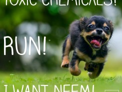 Natural, Neem Pet Shampoo Benefits