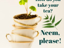 Benefits of Neem Tea