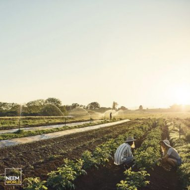 A Sustainable Future with Organic Agriculture