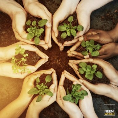 Fighting Climate Change with Healthy Soils
