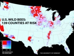 Declining Bee Populations