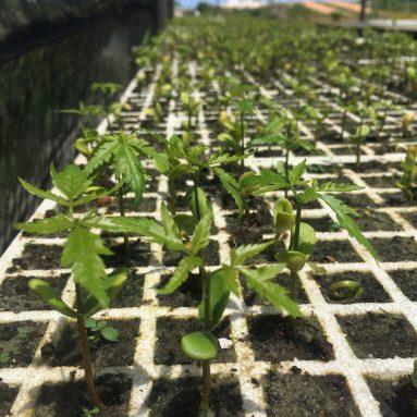 Neem Trees: Saving the Planet