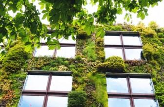 Biophilic Design: Healing Through Nature