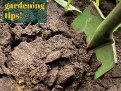 Neem Benefits in an Organic Garden