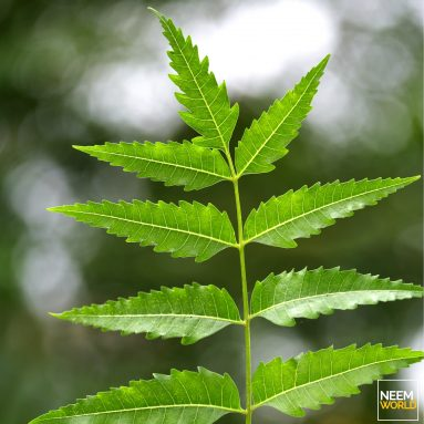 Neem's Advances in Cancer Treatment