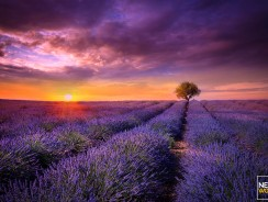 France Sets Limit on Synthetic Pesticides