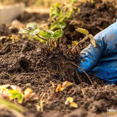 Keeping Soil Healthy in California