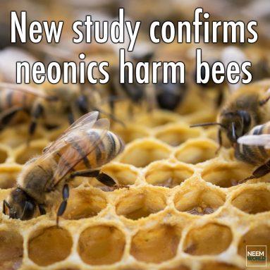 Study Confirms Neonics Harm Bees