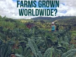 Global Organic Farmland Trends