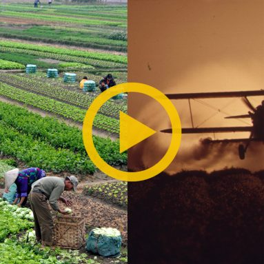 Sustainable Vs Industrial Agriculture