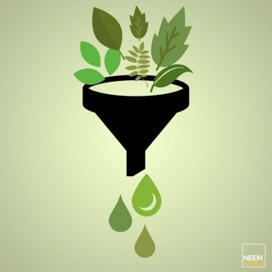 Neem's potential as a biofuel