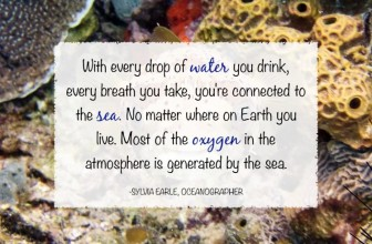 How is Pollution Hurting Our Oceans?