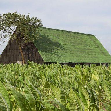 The Organic Revolution in Cuba