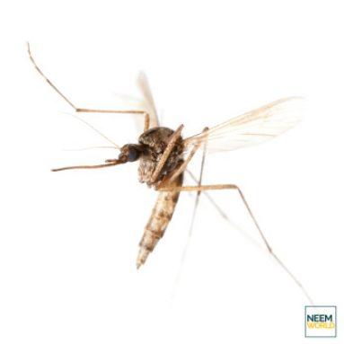 Neem's Repellent Properties